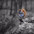 Red Squirrel - selective colour by PhotosByHealy