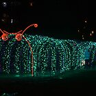 The Christmas Lights Snail... by Carol Clifford