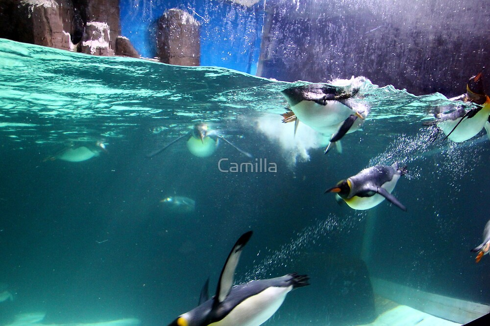 Gentoo Penguins by Camilla