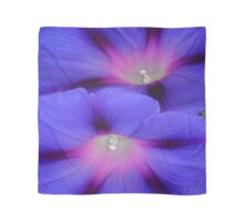 Purple and Pink Colored Morning Glory Flowers Closeup Scarf