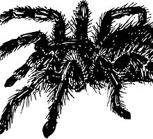 Vector tarantula spider by stasia-ch