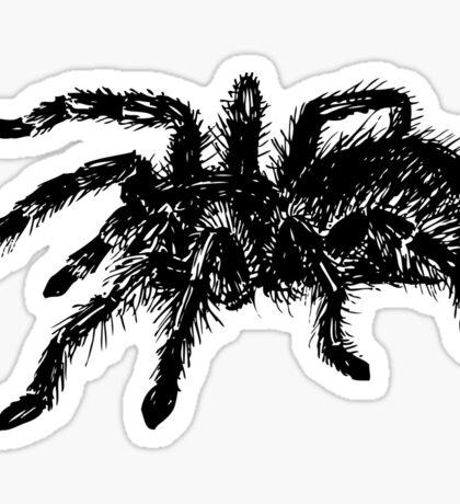 Tarantula spider Sticker