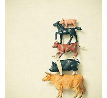 Animal Antics Photographic Print