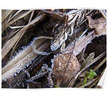 Frozen Grass, Leaves and Plants Poster