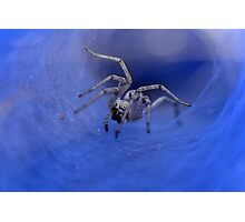 macro photography of a Spider  Photographic Print
