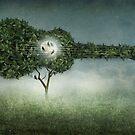 Songbird by Amanda  Cass