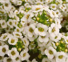 Bloom by Alluu