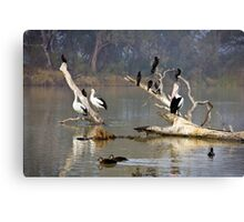 Riverine roost Canvas Print