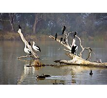 Riverine roost Photographic Print