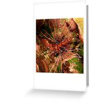 Lionfish at Christmas Bay Greeting Card