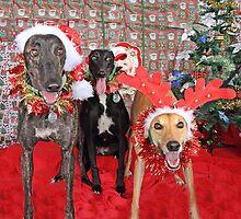 Christmas Joy by GreyhoundSN
