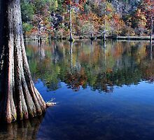 Cypress At Beavers Bend by Carolyn  Fletcher