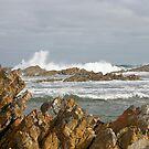 Tarkine coast by Christine Beswick