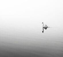 Ecco by enphoto