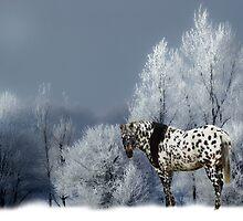 TIGER HORSE  by Randy Branham