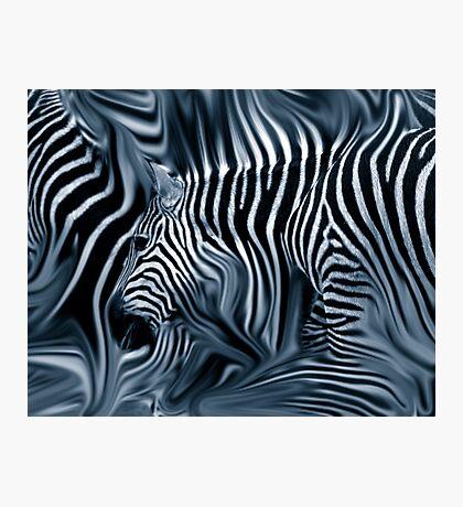 Knee Deep in Blue Zebras  Photographic Print
