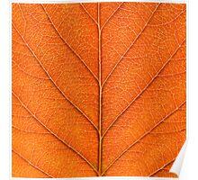 Autumn leaf Study Poster