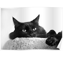 Pooh Bear in Black & White Poster