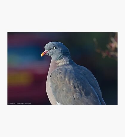 Sitting In The Winter Sun.. Photographic Print