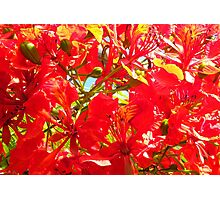 Red Summer Blossom Photographic Print