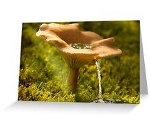 Mushroom Water Source Greeting Card