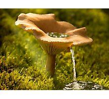 Mushroom Water Source Photographic Print
