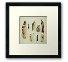 The Feather Collection Framed Print
