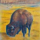 Buffalo in Yellowstone N.P. by itchingink