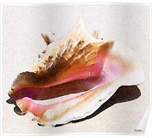 Conch Shell - Listen Poster