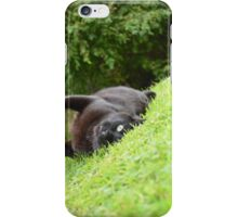 Handsome Kitty Cat.  iPhone Case/Skin