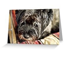 The Eyes of an Old Dog Greeting Card
