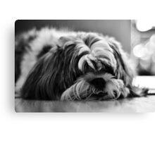 Sad Puppy Canvas Print