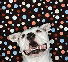 White Pit Bull by monkeydesigns4u