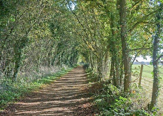 Marriott's Way, Norfolk by Ryan Watts
