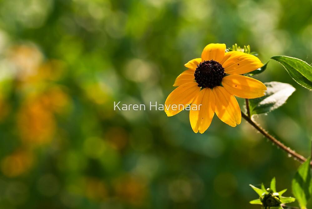 Single Rudbeckia by Karen Havenaar