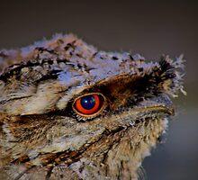 Tawny Frogmounth  by myraj