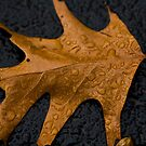Autumn Water Droplets by Sharlene Rens