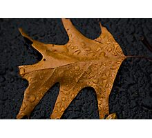 Autumn Water Droplets Photographic Print