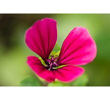 Pink on Green Photographic Print