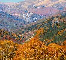 Layers of fall by Gorazd Milosevski