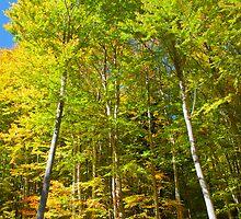 In the woods by Gorazd Milosevski