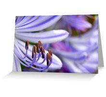 Agapanthus patterns Greeting Card