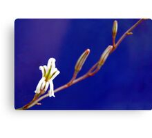Small Aloe Flower Canvas Print