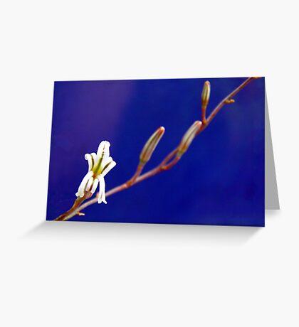 Small Aloe Flower Greeting Card