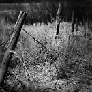 Fenced In by JerryCordeiro