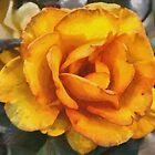 Sundance Hybrid Tea Rose  DAP Whistler's Rainbow by Robert Armendariz