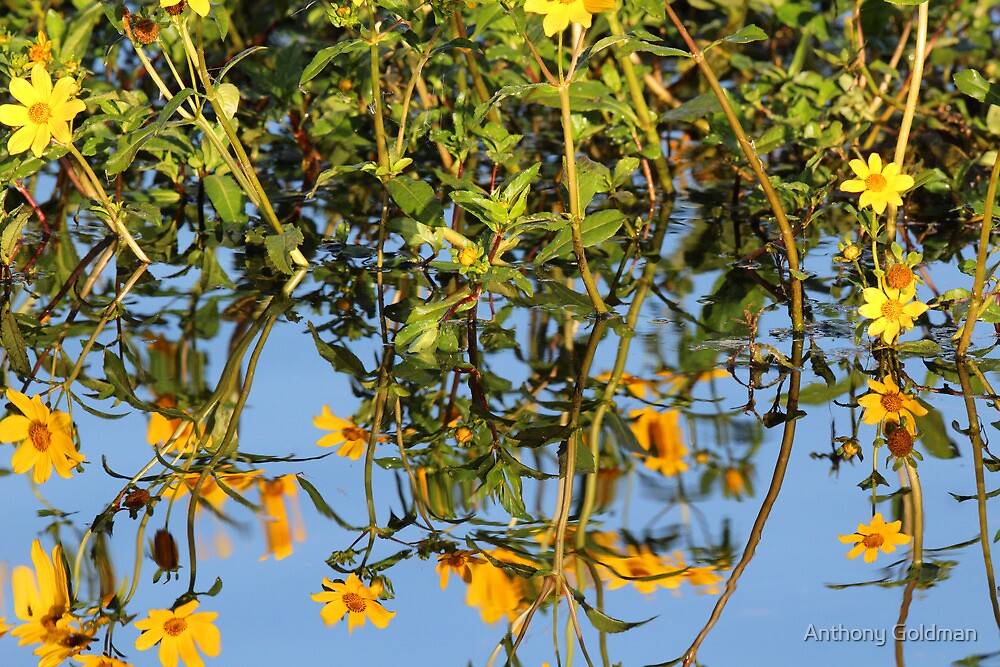 Wild flower reflections by jozi1