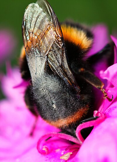 Head over heels in flower by Elaine Game