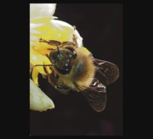 Honey Bee Pollinating Lemon Flower Close Up Baby Tee