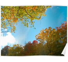 Filtered Autumn Poster